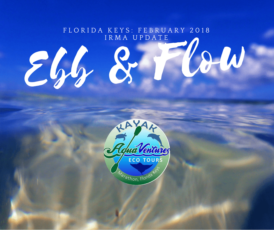 ebb and flow Florida Keys in February